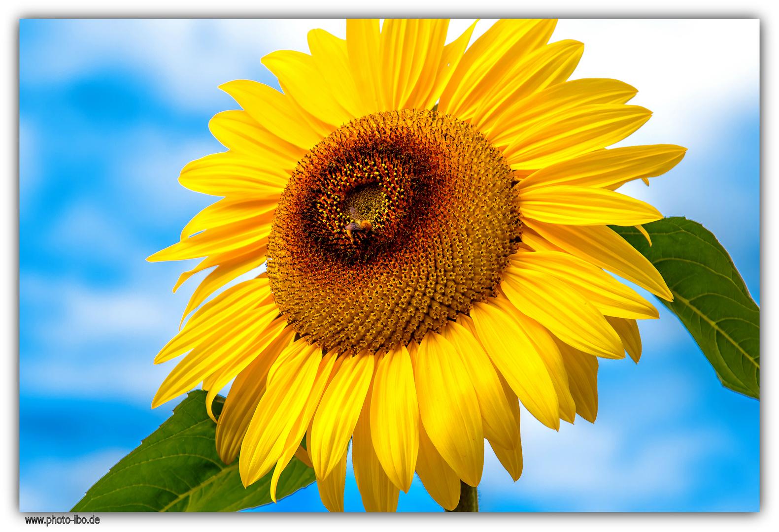 ..lassen wir die Sonne in unsere herzen
