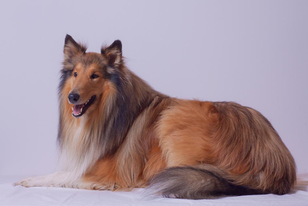 *Lassie lässich*