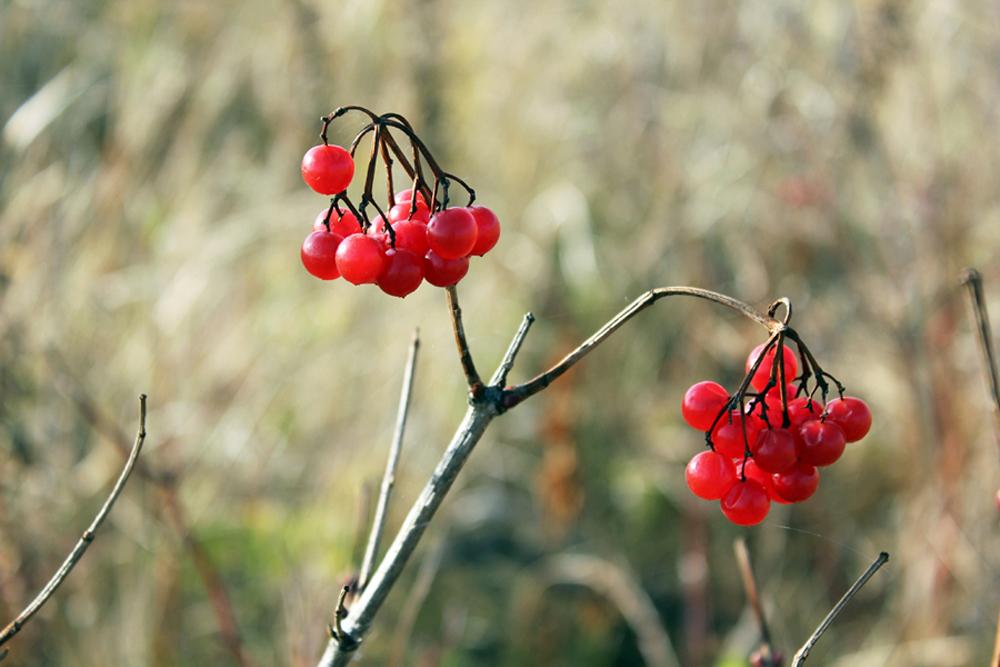 Last autumn berries