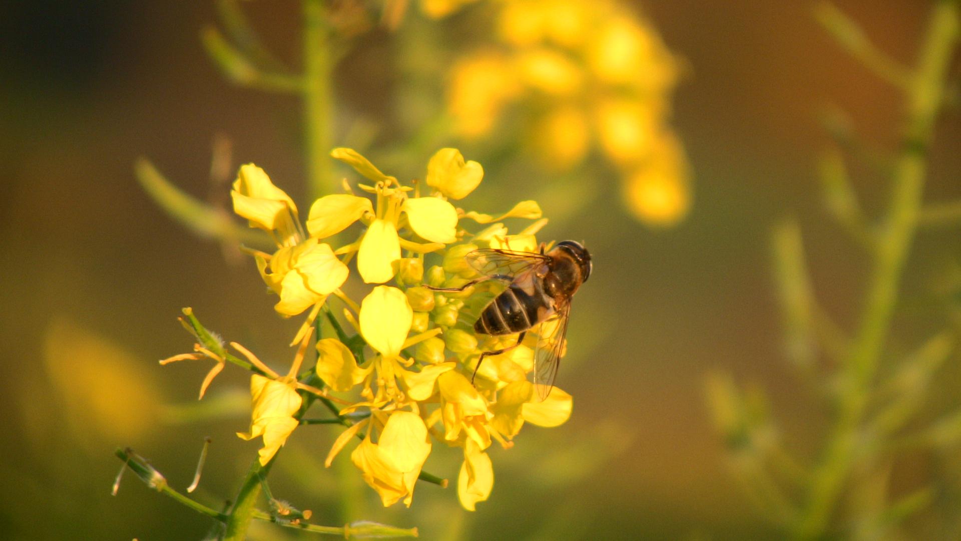 last minute-Biene beim Suchen und Finden