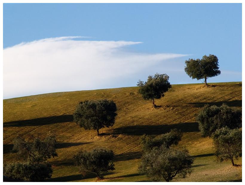 Last Olive-Trees