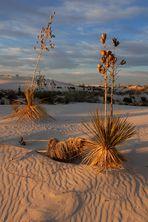 Last Rays Over White Dunes