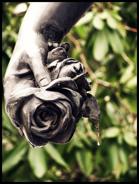 last roses