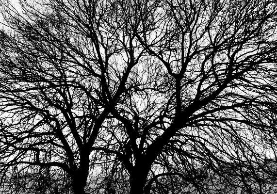 L'astrattismo passa attraverso un albero.