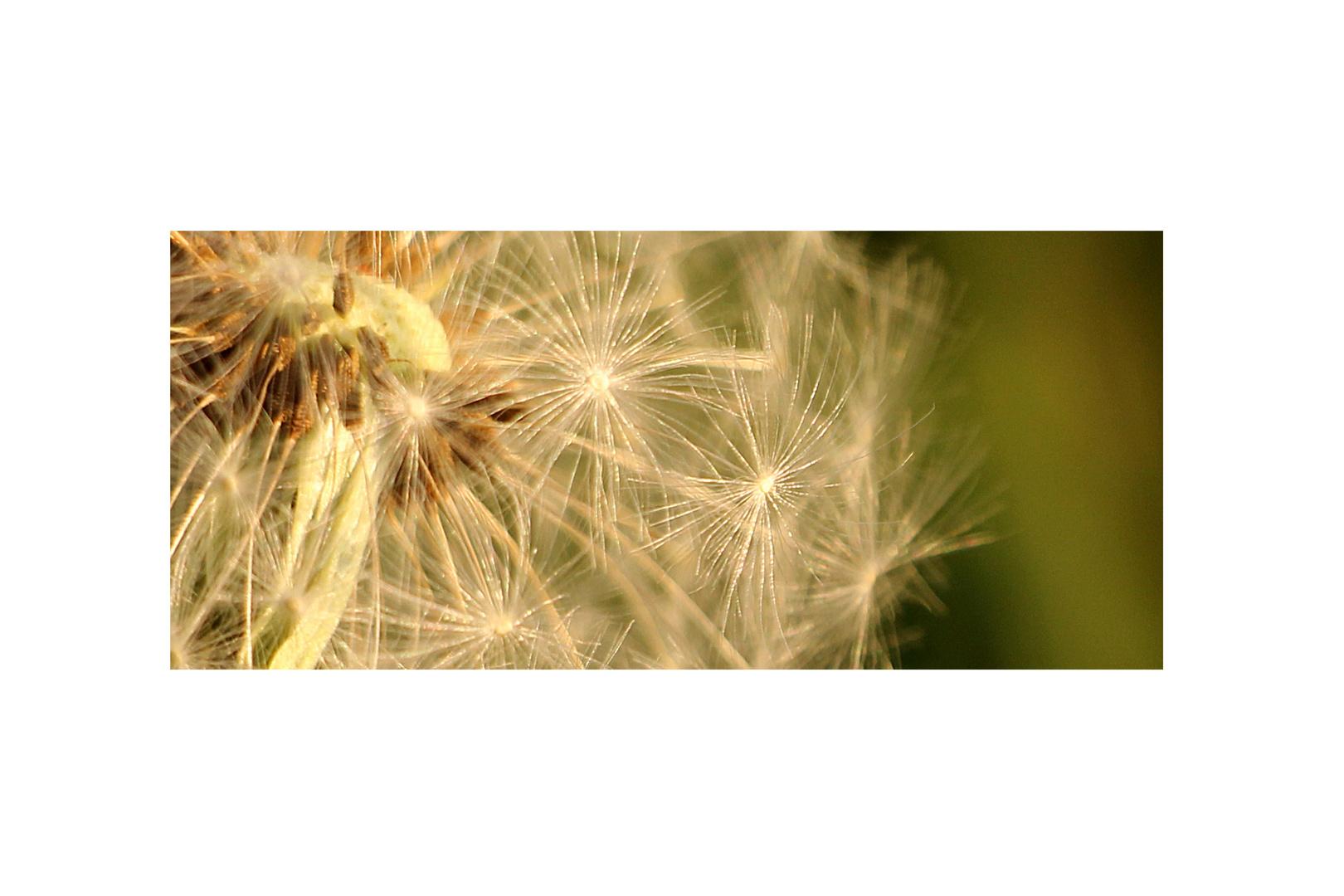 Latawce, dmuchawce, wiatr...
