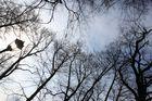 Laterne und Baumwipfel / lantern & tree tops