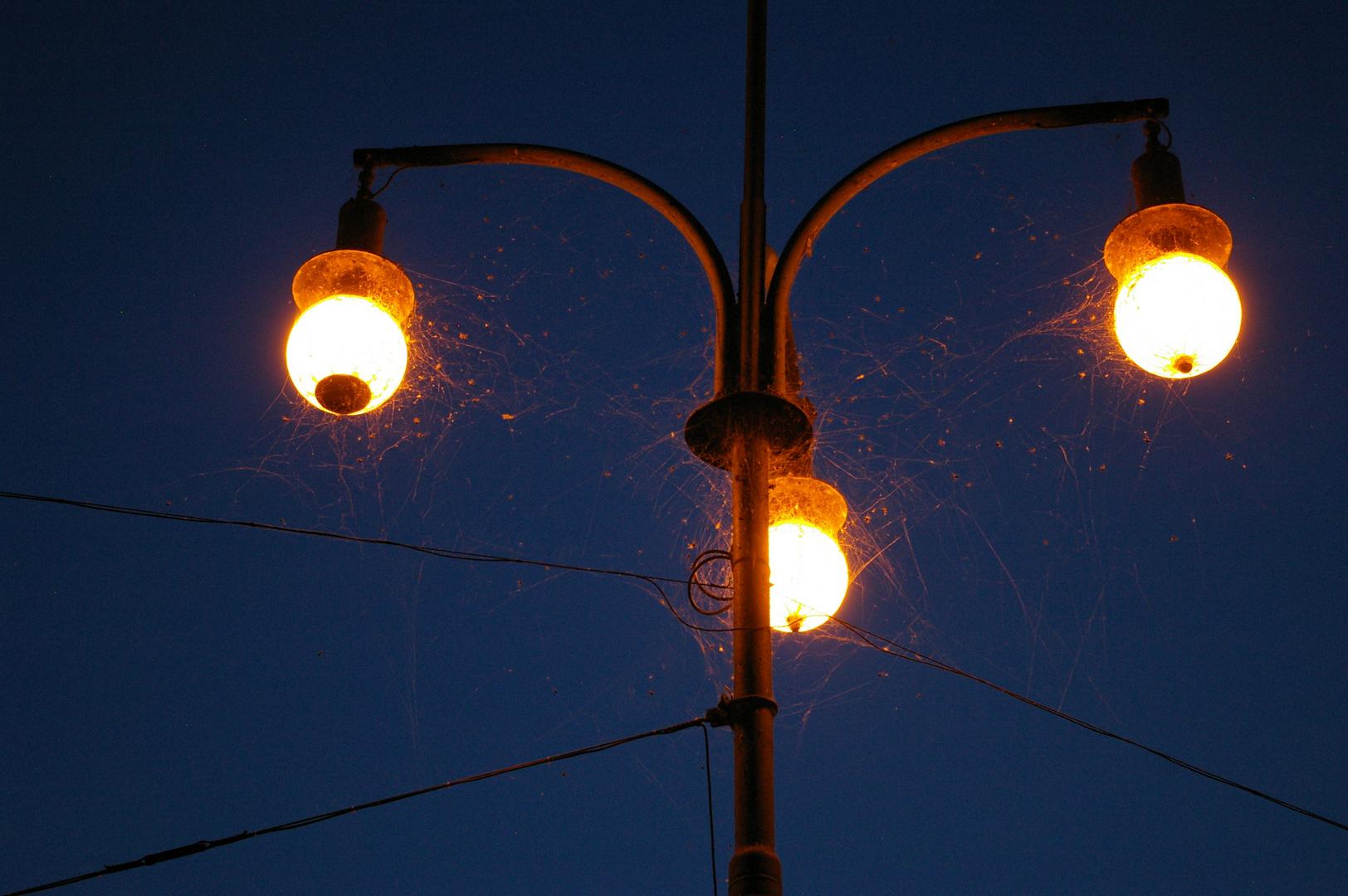 Laternen mit Spinnennetzen überzogen im Abendlicht