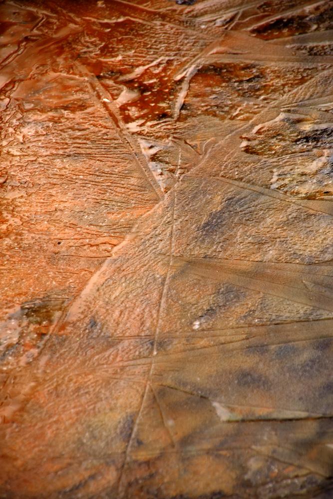 Laub bedeckt mit Eis