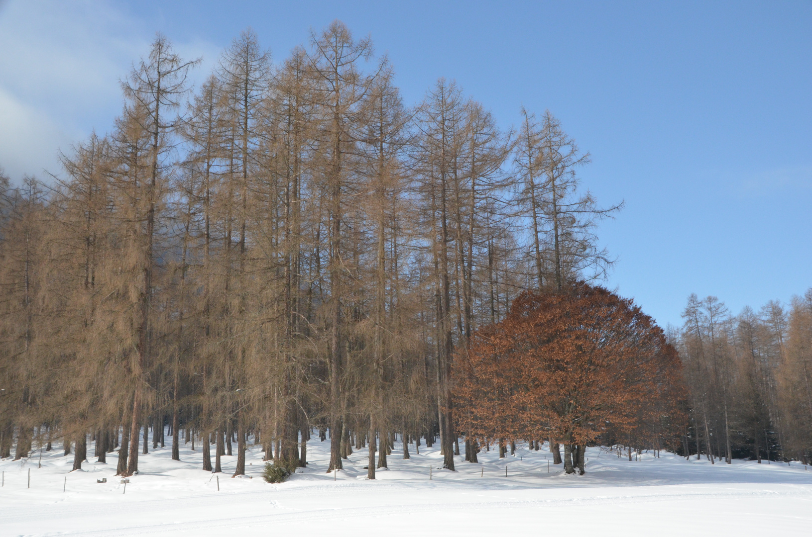 Laub- und Nadelbäume :)