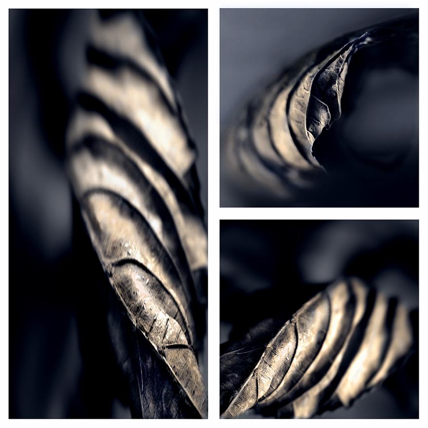 Laub-Zebras