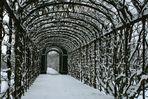 Laubengang beim Schloss Schönbrunn