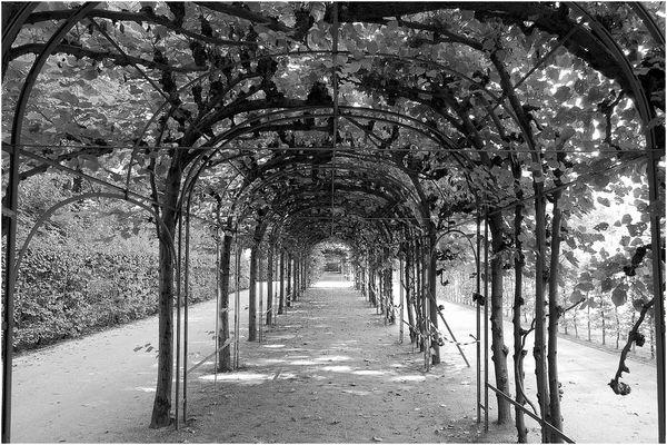 Laubengang Schloss - Sanssouci