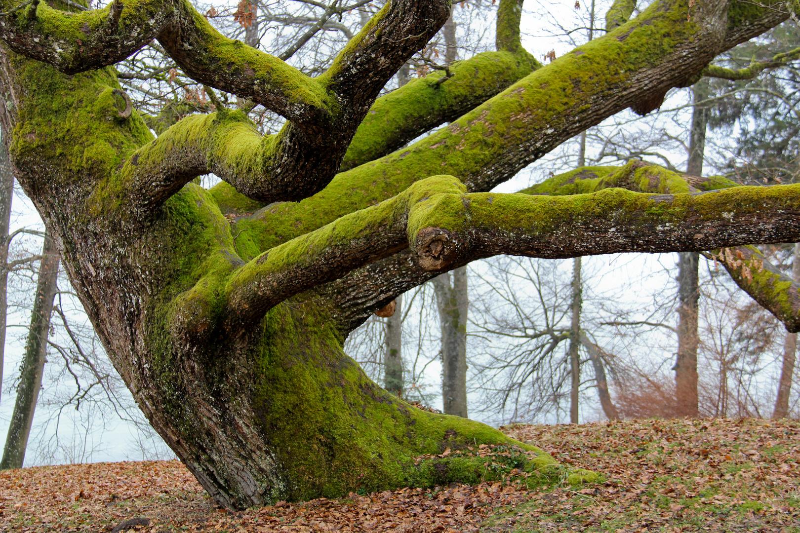 Laublos grün
