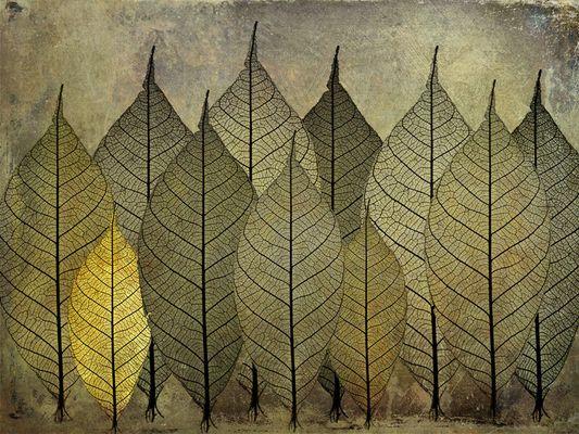 Laub.Wald