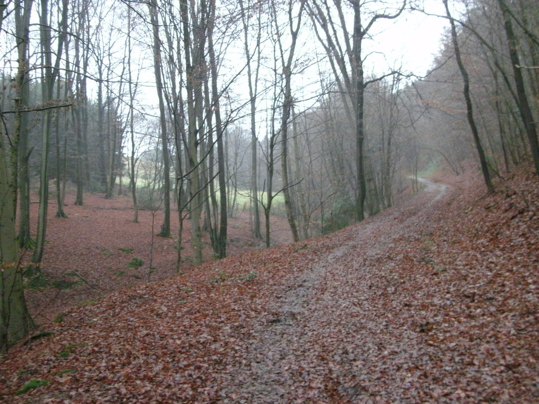 Laubwald