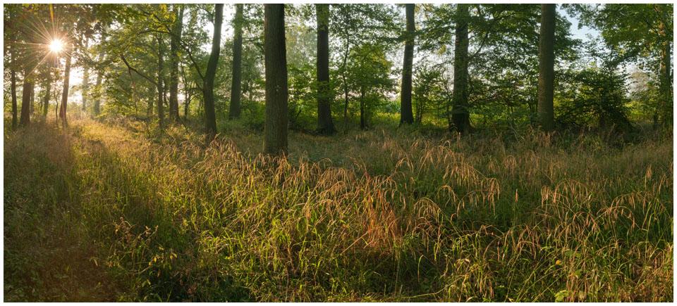 Laubwald im Spaetsommer