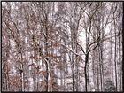 Laubwald im Winter