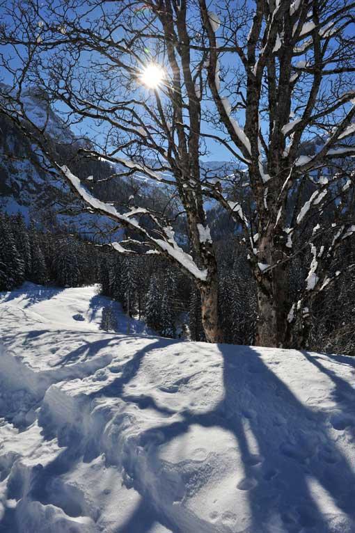 Lauenen Schneeimpressionen 6