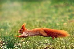 lauf kleines Hörnchen, lauf!