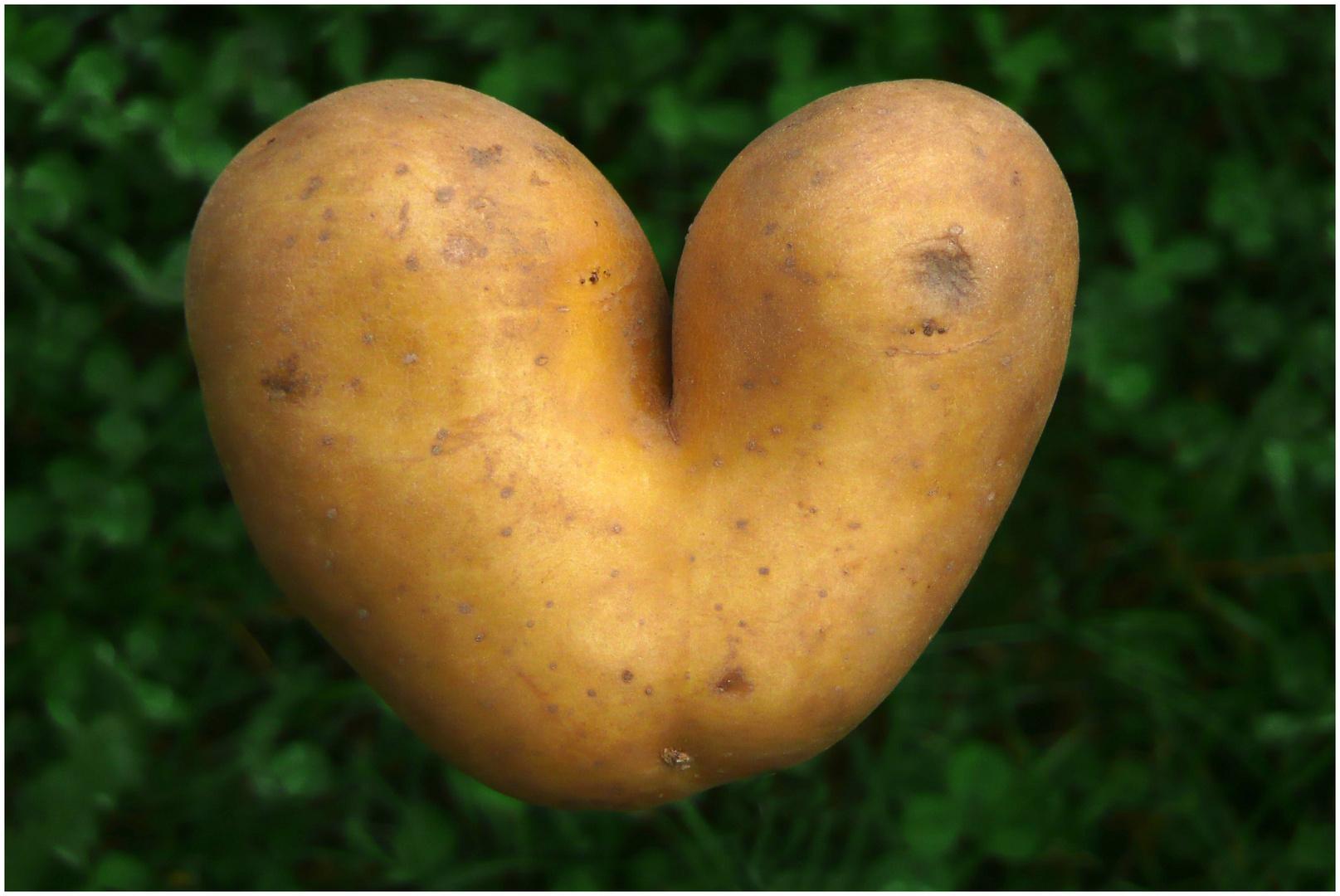 Laune der Natur (Herzkartoffel)