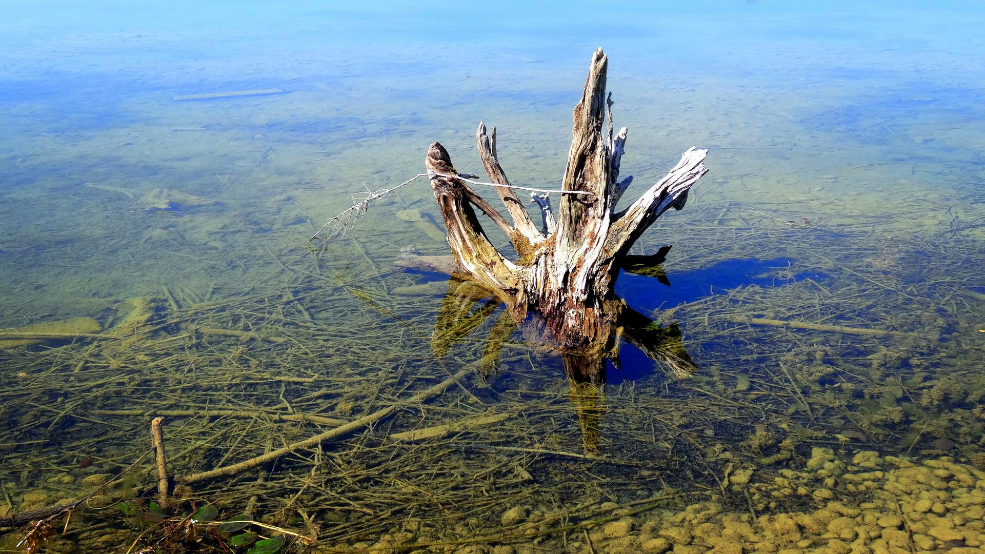 laupheim - wurzel im naturschutzsee