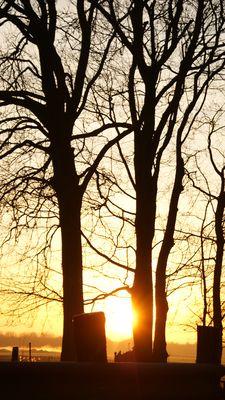 L'aurore des arbres