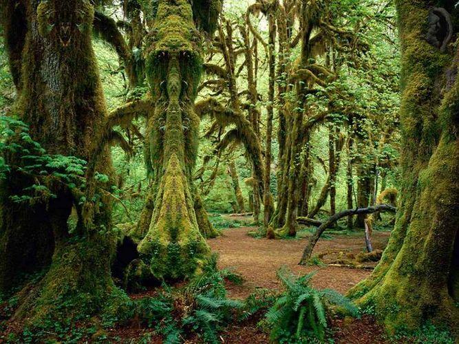 Lauschangriff im Wald