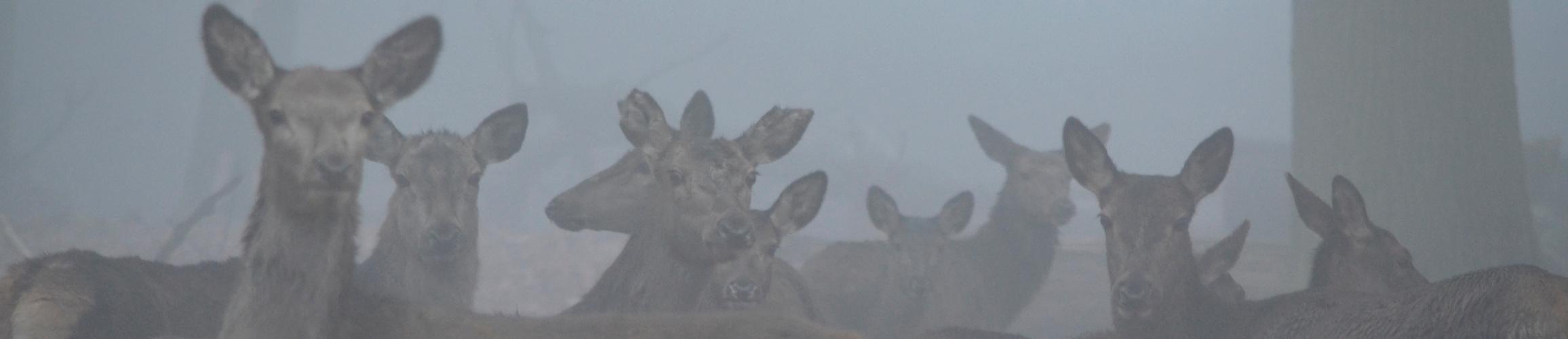 Lauscher auf im Nebel...