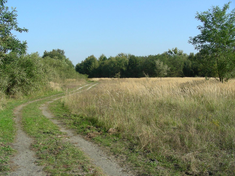 Lausitzer Landschaft