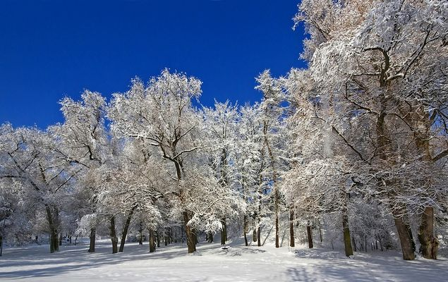 Lausitzer Winter II