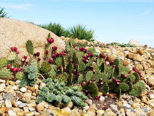 Lausitzer Wüstenpflanzen