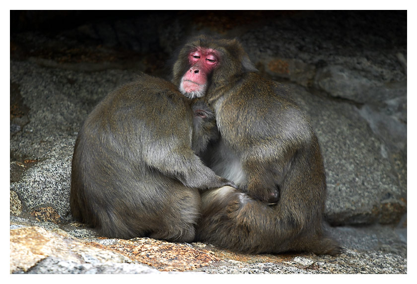 laust der Affe oder ist Zensur nötig? :)