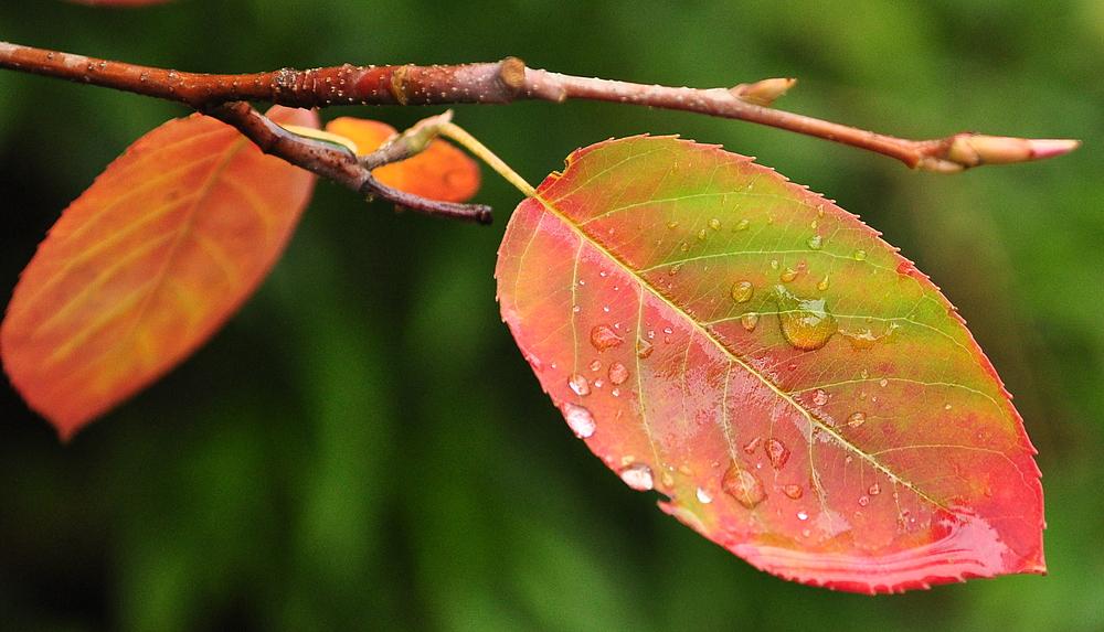 Laut Kalender - ja -aber im Garten blühts als wär noch Sommer...