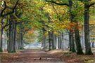 L'automne (3) von Jean COLLETTE
