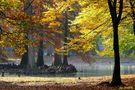 L'automne de Jean COLLETTE