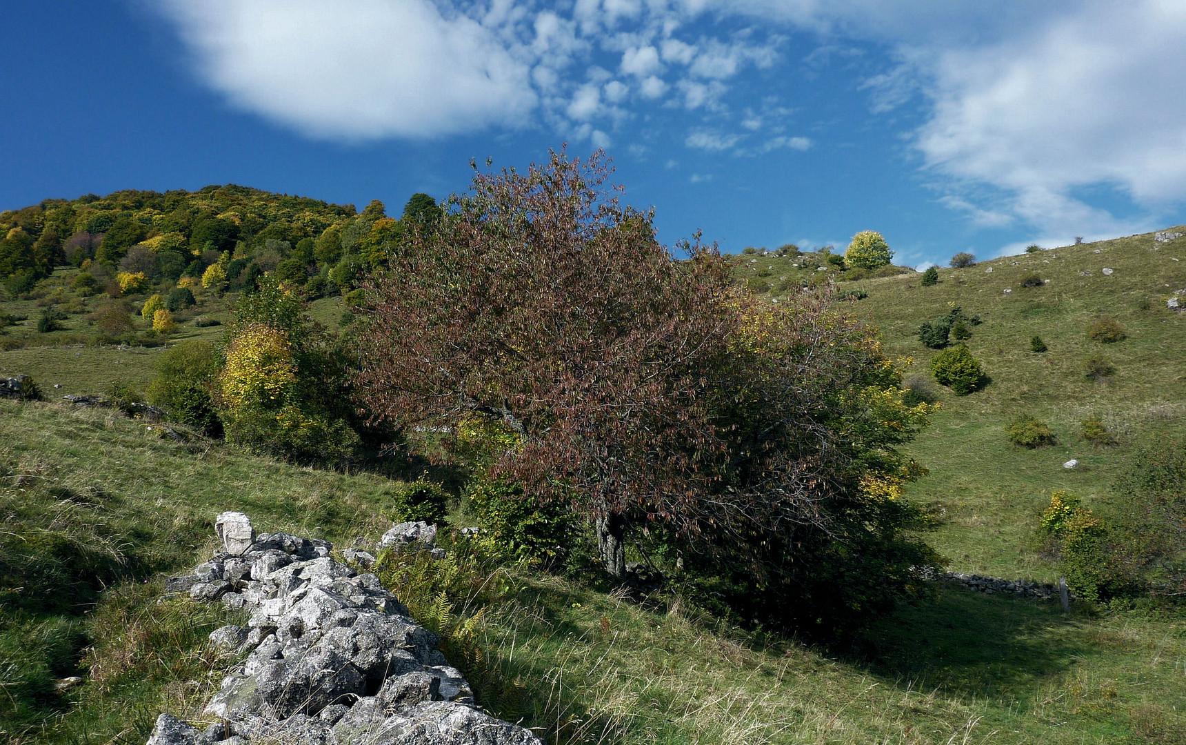 l'automne a rendez vous avec la montagne!