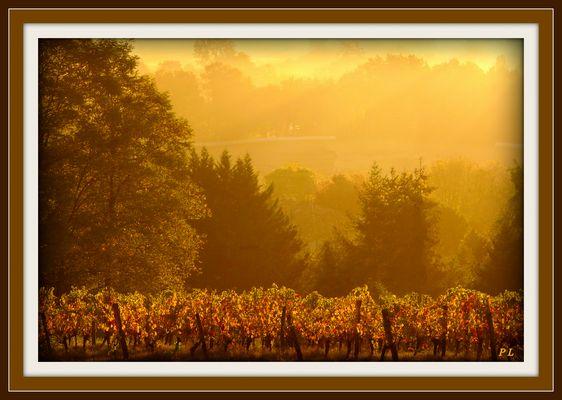 L'automne arrive sur ma campagne