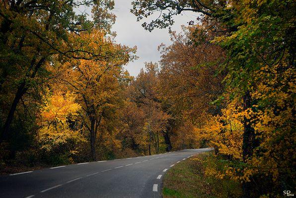 L'automne au bord de la route