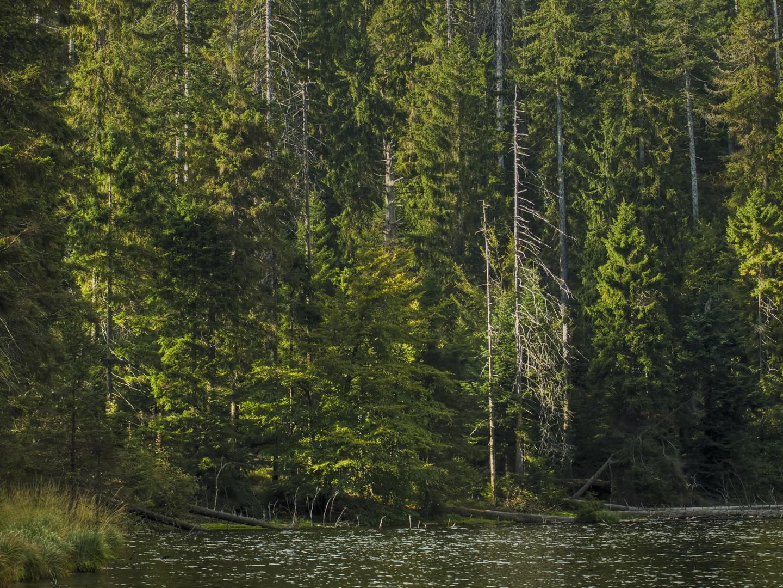 l'automne au lac