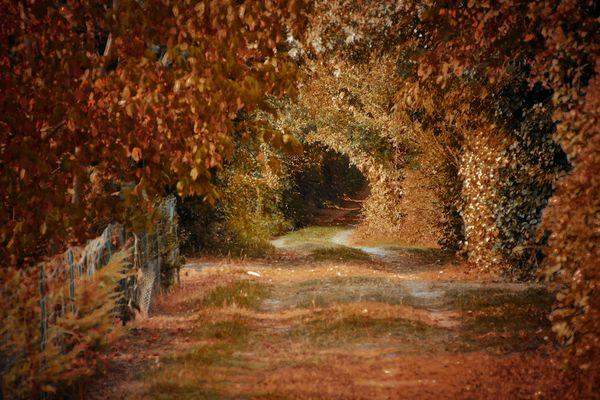 L'automne avant l'heure