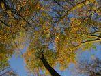 l'automne, comme l'été, se couronne de bleu