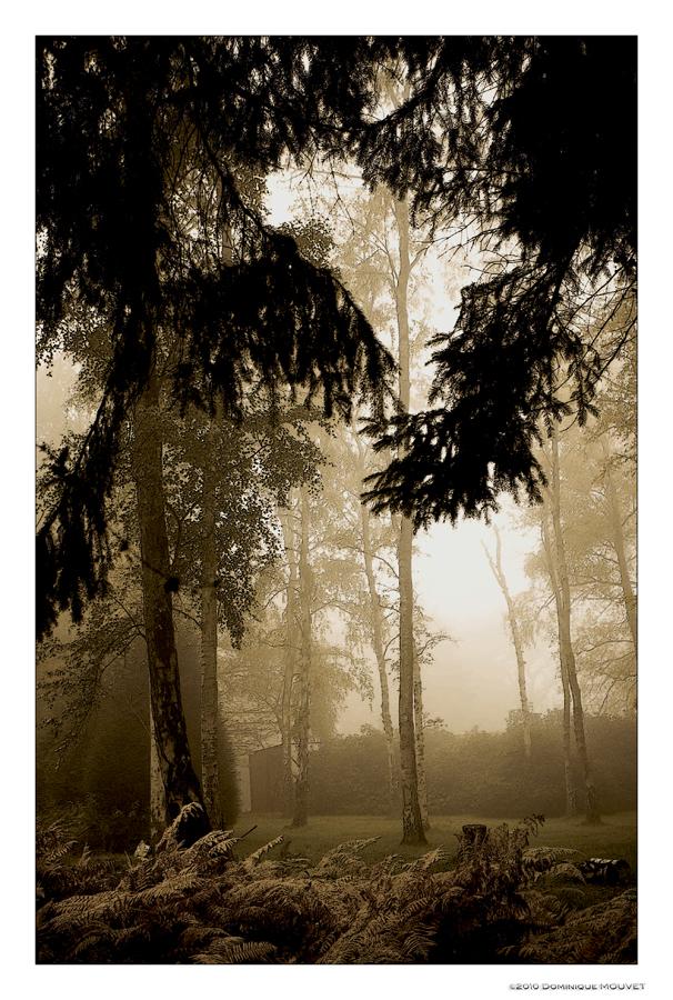 l'automne dans le sous bois....