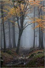 L'automne en forêt.