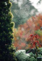 L'automne est un tableau vivant que l'on ne peut fixer sur la toile !!!