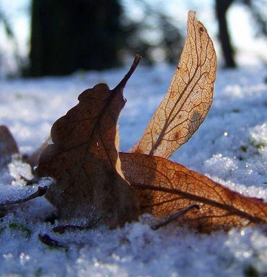 L'automne et l'hiver se croisent