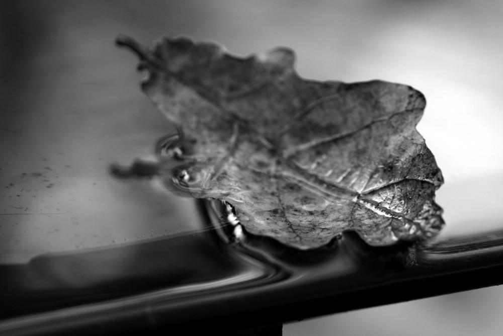 l'automne....