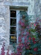 L'automne par la fenêtre!