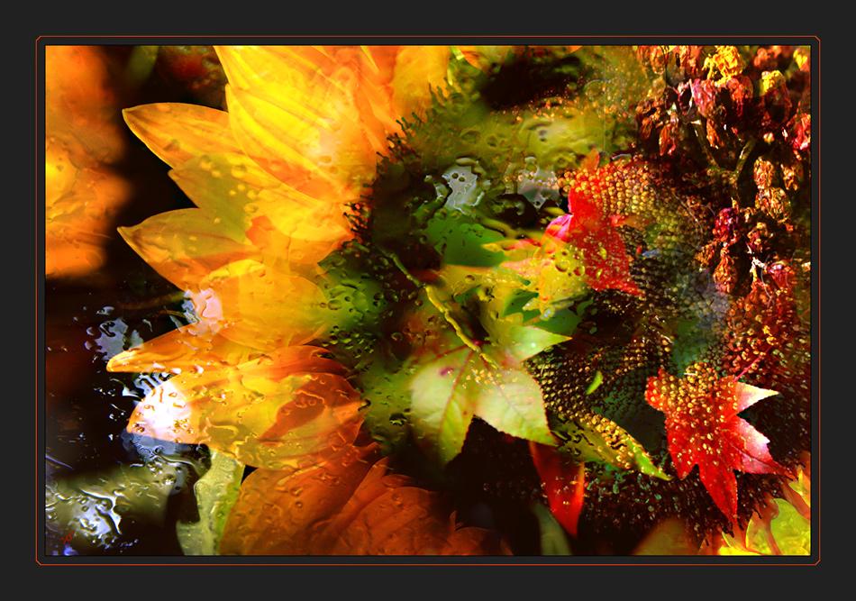 l'automne que j'aime