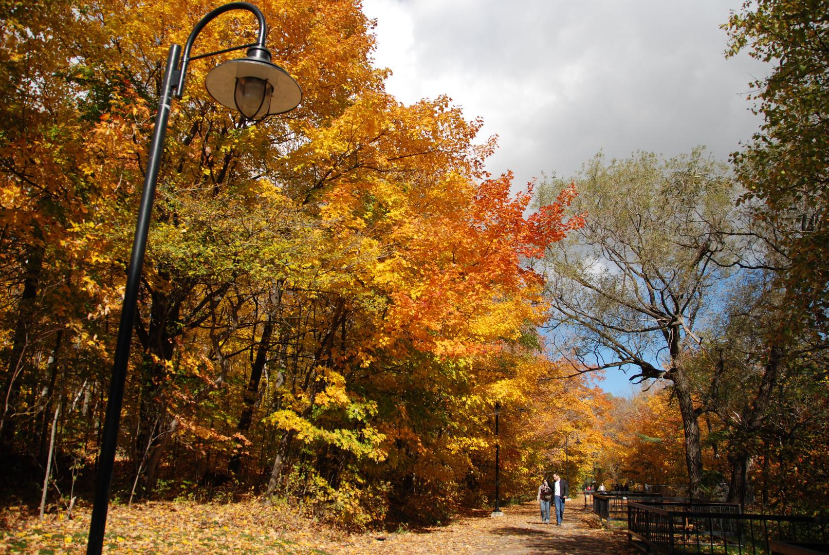 L'automne québecois