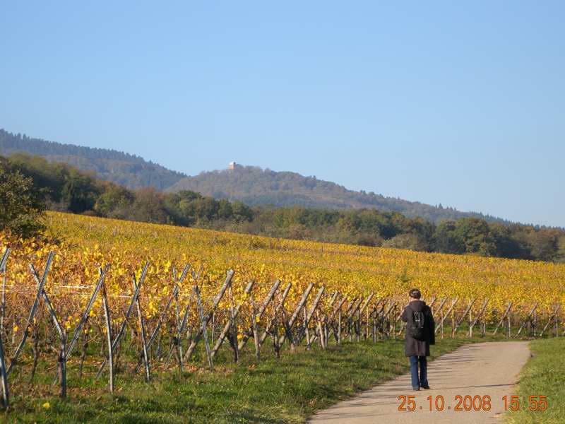 L'automne sur la route des vins en Alsace...